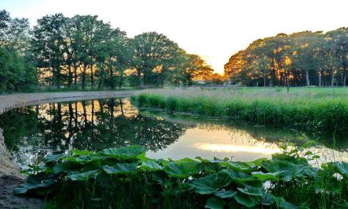 Zdjęcie HOLANDIA / Overijssel / Zenderen / Nad rzeką