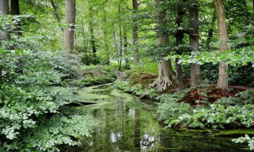 Zdjęcie HOLANDIA / Overijssel / Delden / Leśna zieleń