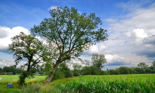 HOLANDIA / Overijssel / Losser / Pogodny dzień