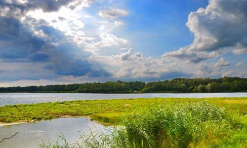 Zdjęcie HOLANDIA / Overijssel / Losser / Staw dla kaczek i innych ptaków