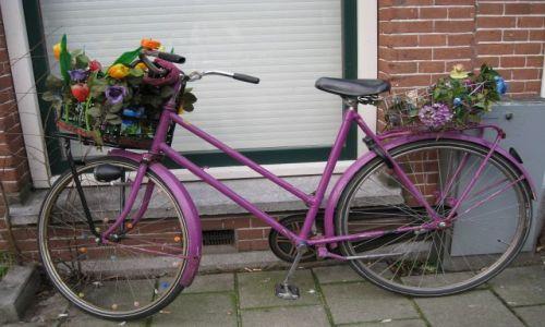 Zdjecie HOLANDIA / Holandia północna / Amsterdam / amsterdamskie r