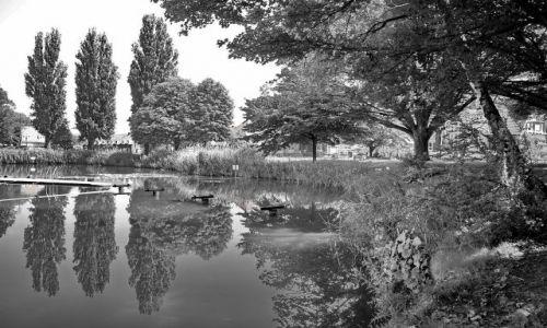 Zdjecie HOLANDIA / Overijssel / Hengelo / Przytłaczająca zieleń