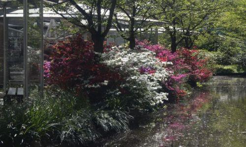 Zdjęcie HOLANDIA / - / Holandia / Ogród - tulipany 1