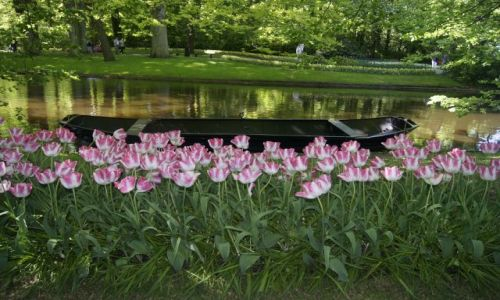 Zdjęcie HOLANDIA / - / Holandia / Ogród - tulipany 0