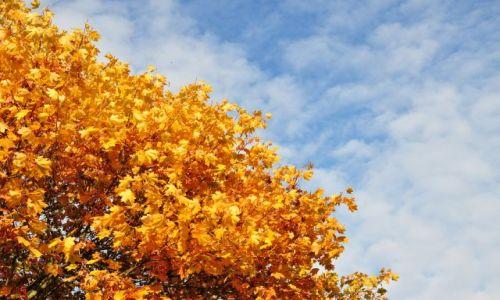 Zdjęcie HOLANDIA / Limburgia / Mastricht / Jesień w NL