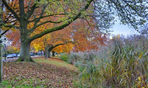 HOLANDIA / Overijssel / Hengelo / Jesień jesień jesień ....