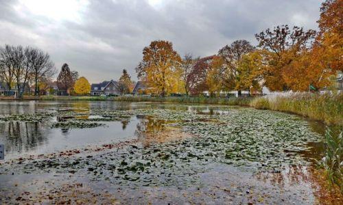 HOLANDIA / Overijssel / Hengelo / Skupiska grzybienia biały