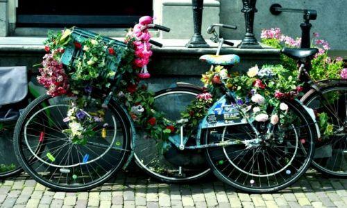 Zdjecie HOLANDIA / - / Amsterdam / I love bikes