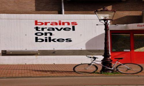 HOLANDIA / - / Amsterdam / Piękny umysł