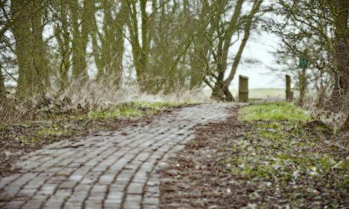 Zdjęcie HOLANDIA / Gelderland / Rheden / Dróżka leśna