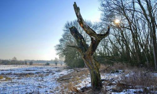 Zdjęcie HOLANDIA / Gelderland / Millingerwaard / Zimowy koloryt