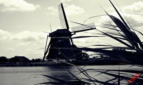 Zdjecie HOLANDIA / - / Bleiswijk / Stary wiatrak