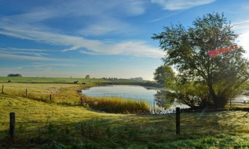 Zdjęcie HOLANDIA / Geldria / Ochten / Wiejski krajobraz
