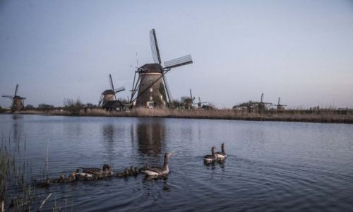 Zdjecie HOLANDIA / Kinderdijk / Kinderdijk / Wiatraki w Kinderdijk
