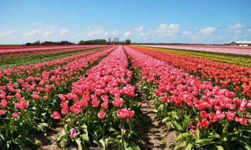 Zdjęcie HOLANDIA / Północna Holandia / Callantsoog / Kolory
