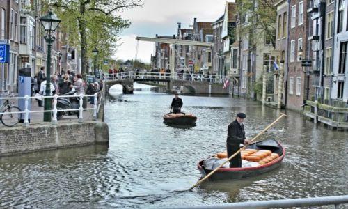 Zdjęcie HOLANDIA / Holandia Północna / Alkmaar / targ serowy