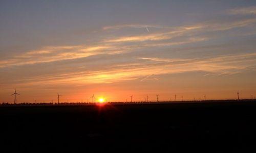 Zdjęcie HOLANDIA / Flevoland / Zeewolde / wiatraki na tle zachodzącego słońca