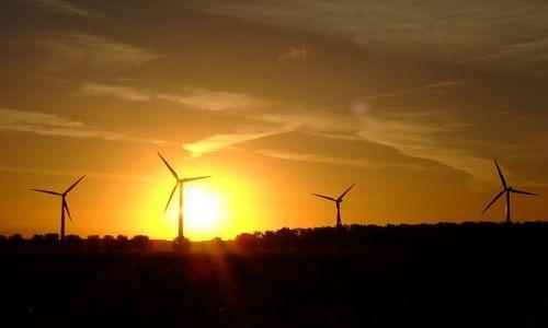 Zdjecie HOLANDIA / Flevoland / Zeewolde / wiatraki na tle wschodzącego słońca