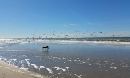 HOLANDIA / Haga / Kijkduin / Morze P�nocne