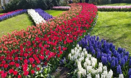 Zdjęcie HOLANDIA / Lisse / Keukenhof / Ogród kwiatowy