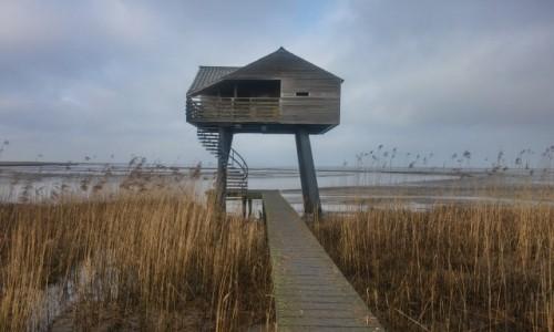 Zdjecie HOLANDIA / zatoka morska / kiekkaaste  / domek dla ornit