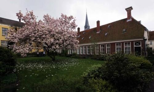 Zdjęcie HOLANDIA / Groningen / Duch Święty / Wiosna w ogrodzie