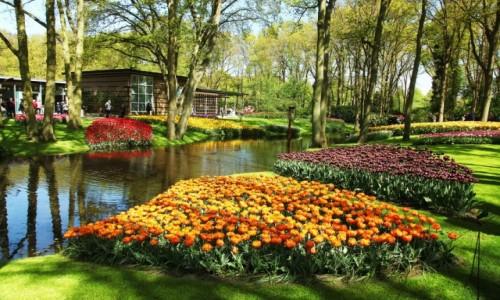 HOLANDIA / Amsterdam / Ogrody Keukenhof / Nad wodą