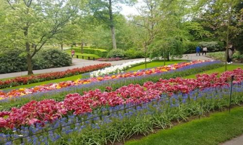 Zdjecie HOLANDIA / Lisse / keukenhof  / Tulipany