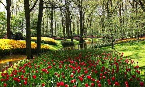 Zdjecie HOLANDIA / Amsterdam / Ogrody Keukenhof / Tulipanowy zawrót głowy