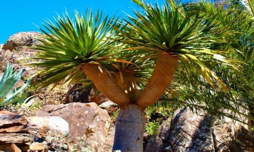 HISZPANIA / Wyspy Kanaryjskie / La Gomera / flora La Gomery 4