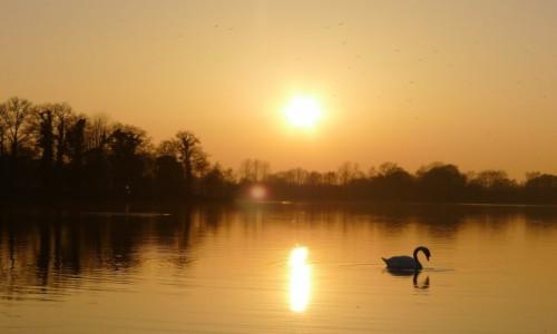 HOLANDIA / Achterhoek/ Wschodnia  Holandia / Jezioro Hilgelo w miejscowości Winterswijk  / Romantycznie nad Hilgelo