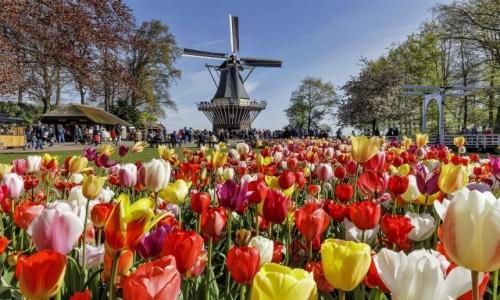 HOLANDIA / Amsterdam / Ogrody Keukenhof  / Symbole Holandii