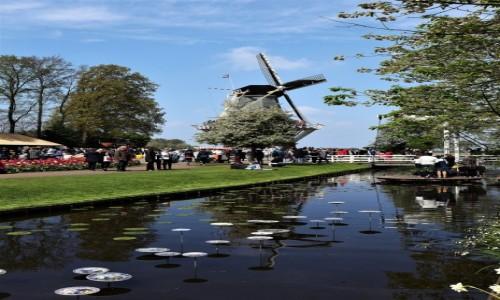 Zdjecie HOLANDIA / Amsterdam / Ogrody Keukenhof  / Symbol Niderlandów