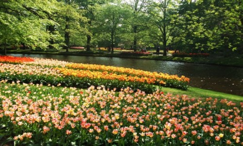 Zdjecie HOLANDIA / Lisse / Keukenhof / Keukenhof Garden
