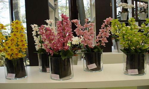Zdjecie HOLANDIA / okolice Lisse / Keukenhof Park / wystawa orchidei