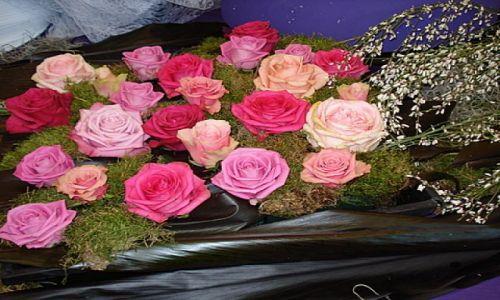 Zdjecie HOLANDIA / okolice Lisse / Keukenhof Park / wystawa roz