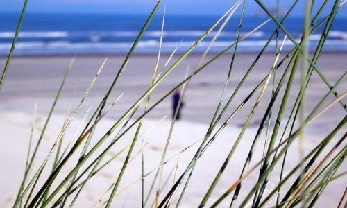 HOLANDIA / Ameland (Friesland) / ameland / Ameland plaża