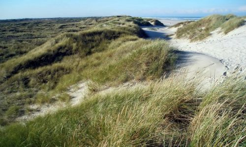 Zdjęcie HOLANDIA / Ameland (Friesland) / ameland / Ameland