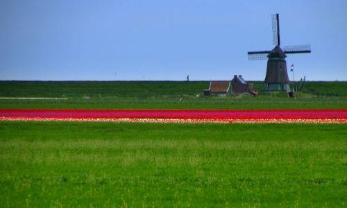 Zdjecie HOLANDIA / brak / Amsterdam / człowiek w naturze