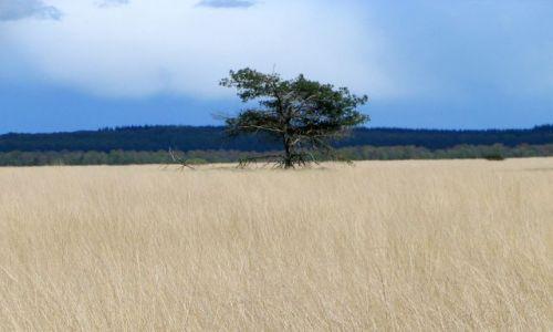 Zdjecie HOLANDIA / brak / brak / drzewo