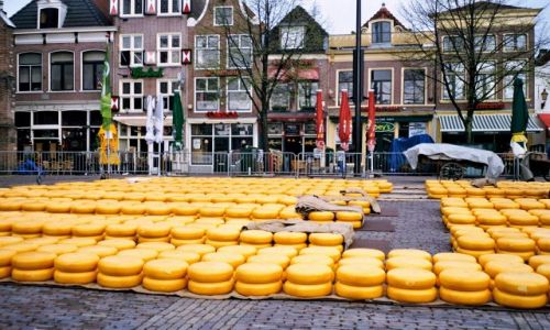 Zdjęcie HOLANDIA / Holandia Północna / Alkmaar / Targi serowarskie