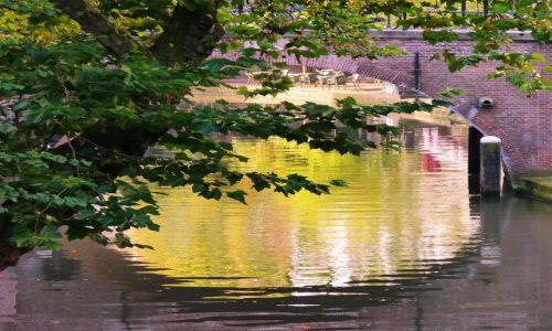 Zdjęcie HOLANDIA / utrecht / utrecht / Opadające drzewo i mostek