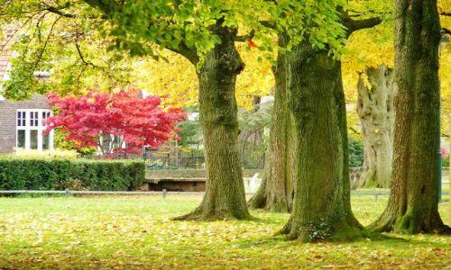 Zdjęcie HOLANDIA / Overijssel / Hengelo / Barwy jesieni (3)