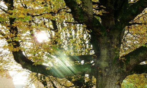 Zdjecie HOLANDIA / Overijssel / Hengelo / Barwy jesieni (4)