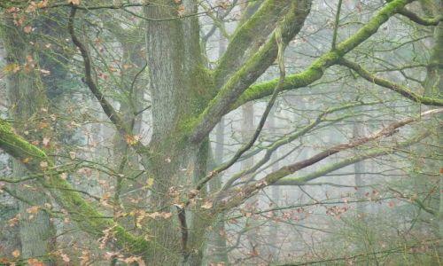 Zdjecie HOLANDIA / Drenthe / Schoonoord / Aura leśna