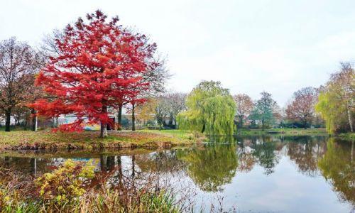 Zdjęcie HOLANDIA / Overijssel / hardenberg / Staw w Hardenbergu