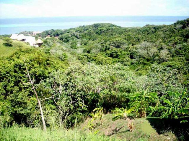 Zdjęcia: Roatan, Honduras, Roatan, HONDURAS