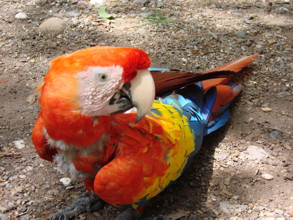 Zdjęcia: Interior, Interior, Kolorowa papuga, HONDURAS