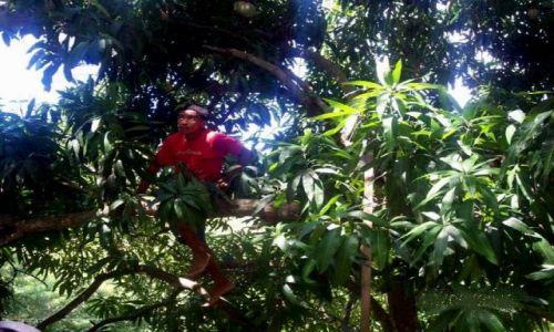 HONDURAS / Honduras / Roatan / zrywając melony