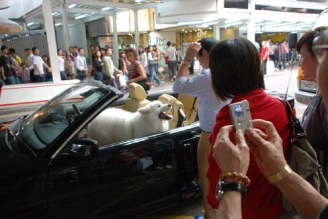 Zdjęcia: centrum, Hong Kong, Uliczne zycie HKG, HONG KONG
